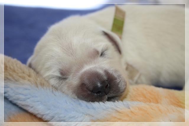 A dreamy Miss Stripe at one week old