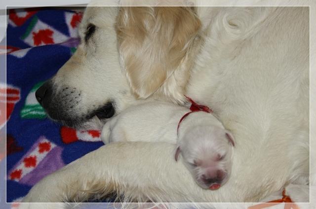 Miss Ruby snuggling with mum Analiesa