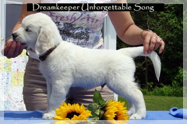 Mr. Unforgettable Song - Handsome Hudson at 8 weeks