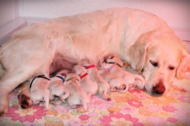 Star enjoying her pups