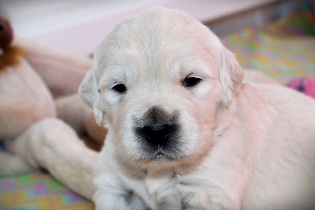 3 weeks old !