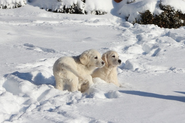 Lovely Lucy and her brother Armani enjoying the winter as young pups