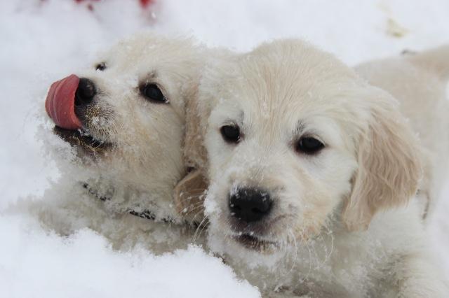 Fun in the snow !!