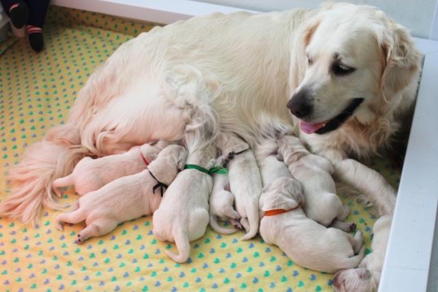 Opal enjoying her babies !