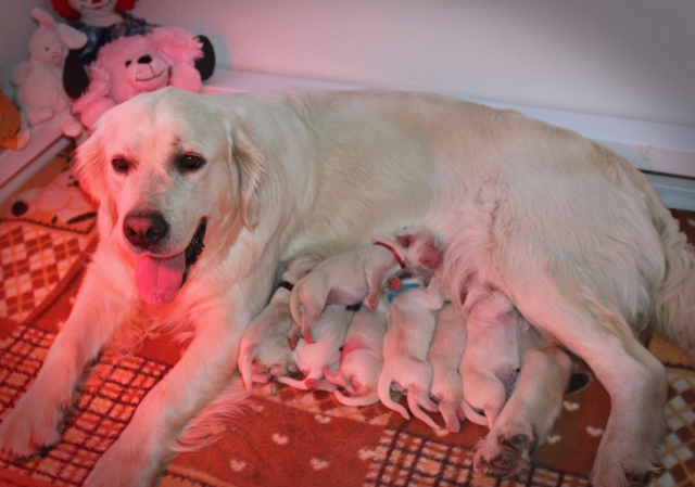 Proud mama Tia with her new family